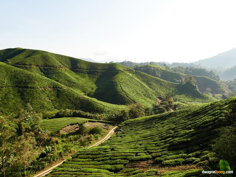 cameron highland, malaysia, travel photography