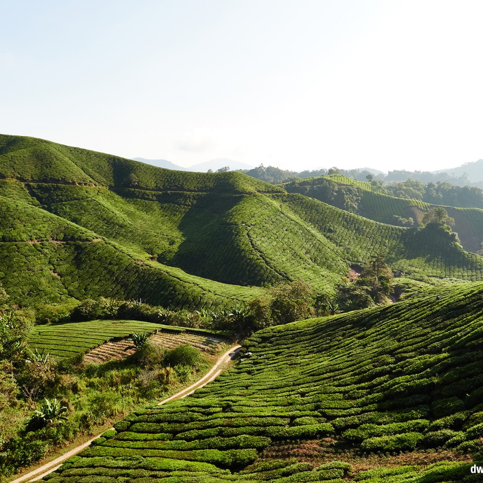 A landscape shot of Cameron Highlands, Malaysia, photographed with the morning sun.